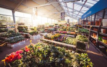 Článek: Nákup pokojových rostlin