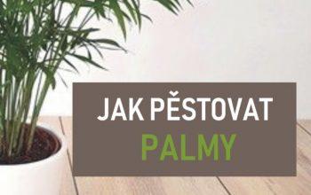 Článek: Jak pěstovat palmy